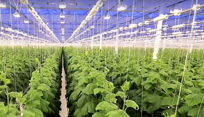 Russland erwartet 2018 einen Rekord bei der Gemüseernte
