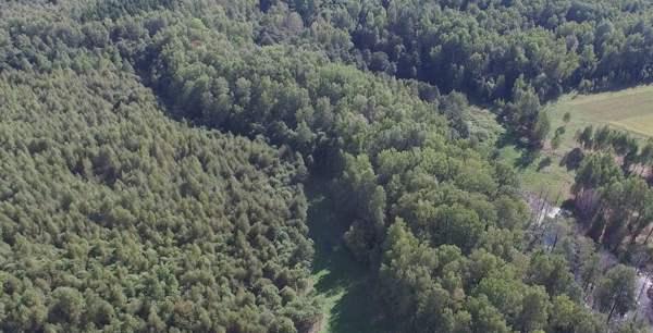 Rosleskhoz will Verkauf von russischem Holz nach China verbieten