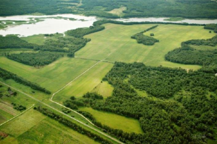Zur Entwicklung der russischen Landwirtschaft 2019: Allgemeine Trends und Marktentwicklung