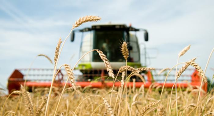 Rekordhohe Getreidepreise helfen 2020 südrussischen Landwirten