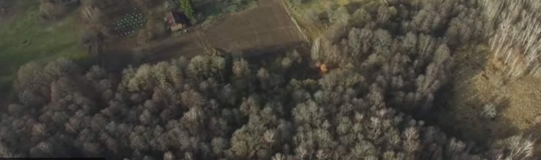Hauptprobleme der russischen Forstwirtschaft