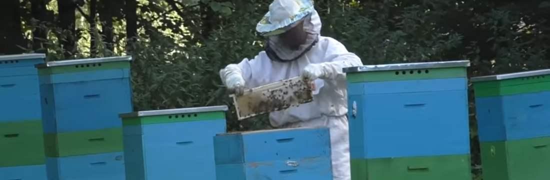 Rosselkhoznadzor macht russisches Wirtschaftsministerium für Massensterben von Bienen verantwortlich